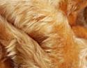 Langhaarfell ca. 60 mm Flor Bär, Schäferhund beige meliert
